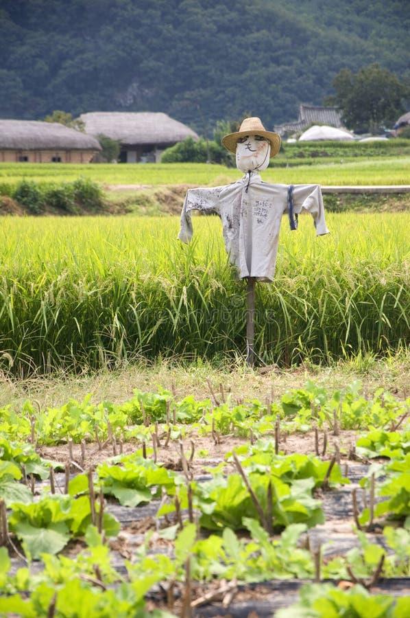 Épouvantail, Corée du Sud image libre de droits