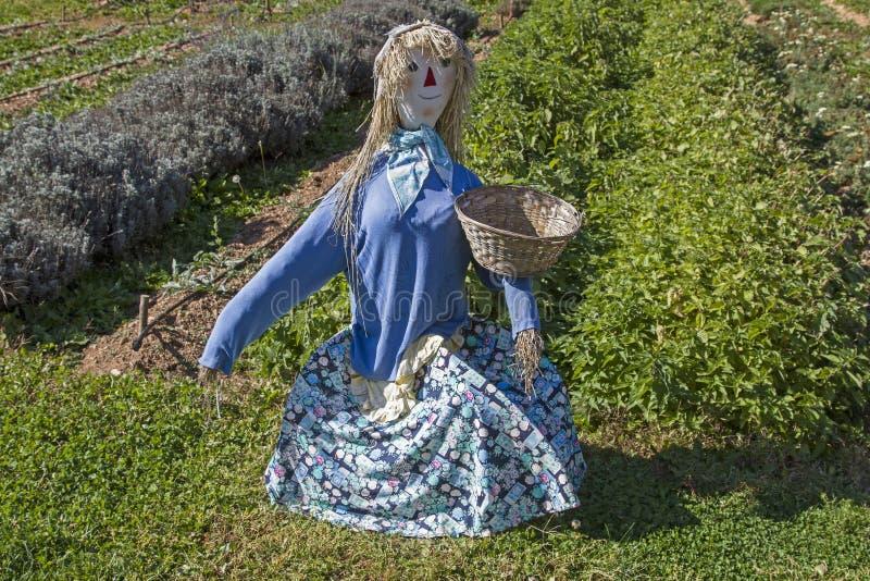 Épouvantail dans le jardin d'herbes aromatiques images libres de droits