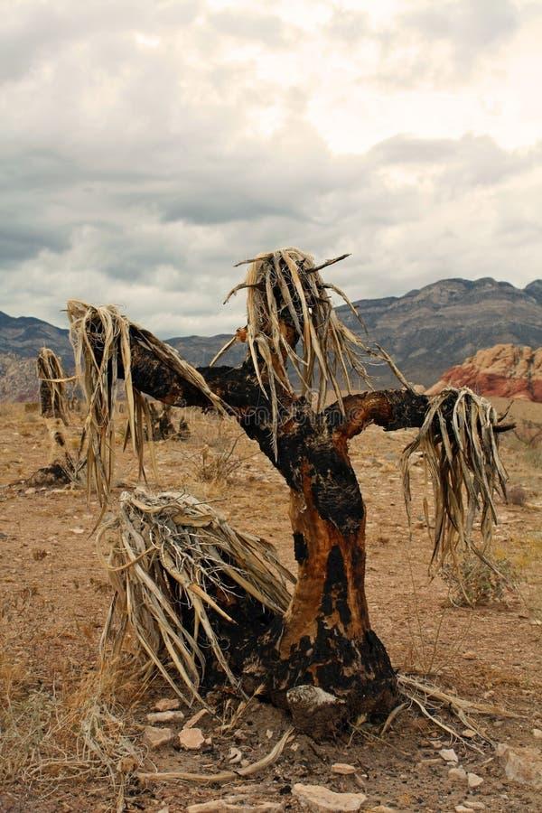 Épouvantail de yucca photo stock