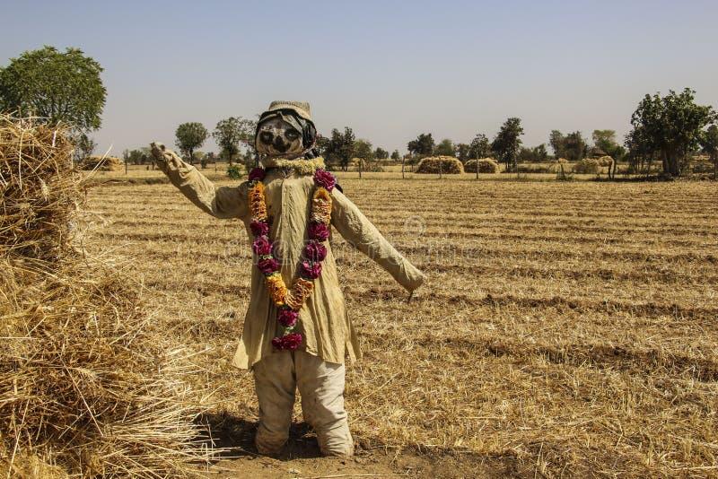 Épouvantail sur le champ de blé photo stock