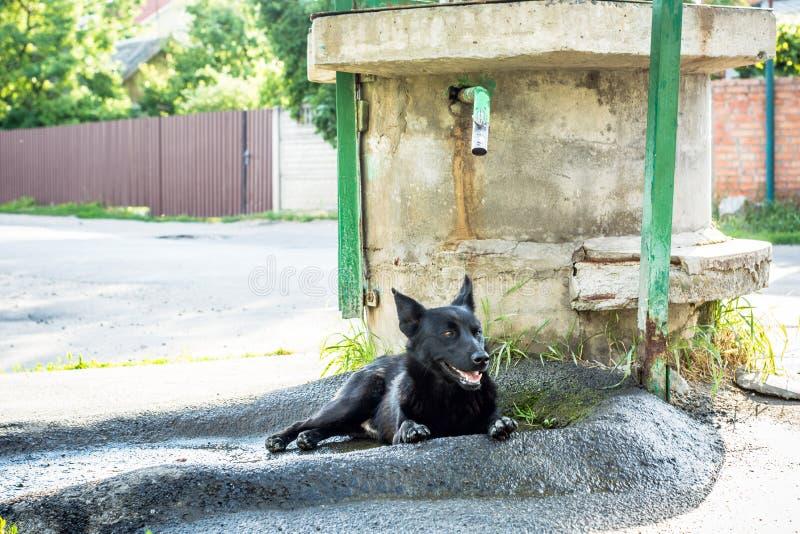 Épuisé par la chaleur de l'enfer, un chien noir, fixent dans bien du bien pour refroidir son corps photographie stock libre de droits