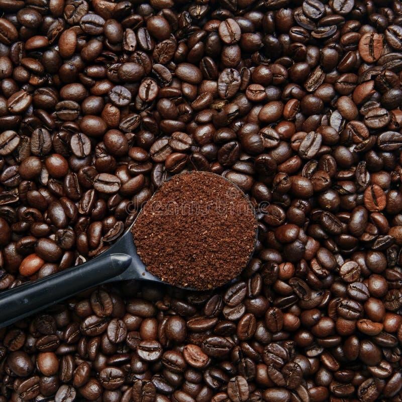 Épuisette de Coffe sur des haricots photos libres de droits