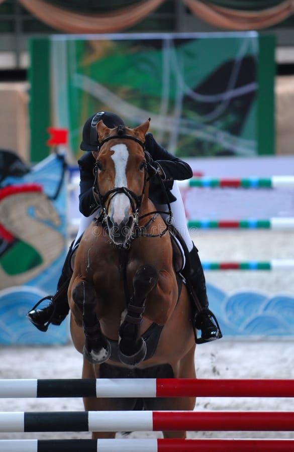 Download Équestre photo stock. Image du goujon, poney, race, étalon - 727638
