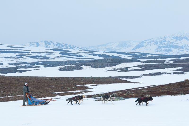 Équipe de crabot sur la toundra de l'hiver photos libres de droits