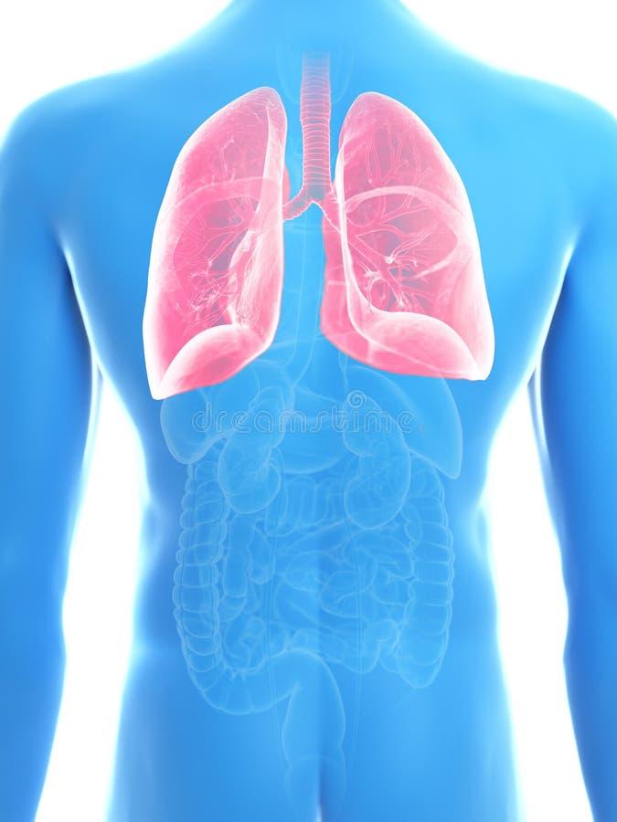 Équipe le poumon illustration de vecteur
