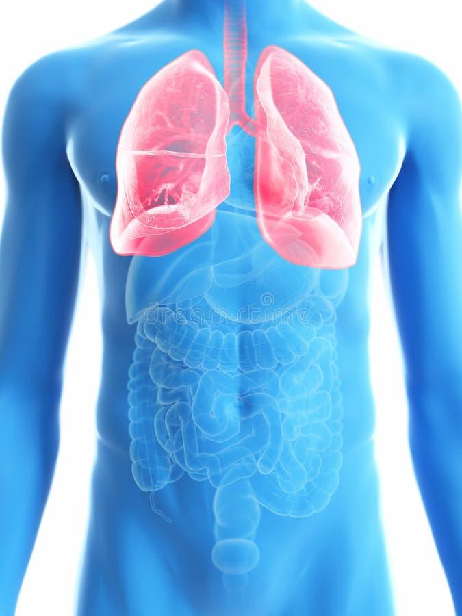 Équipe le poumon illustration stock