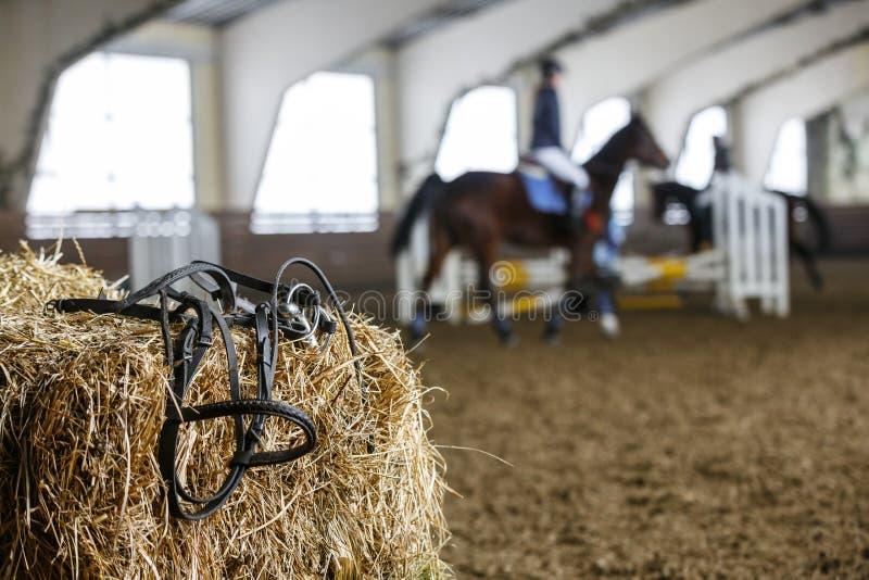 Équipement et dressage de cheval photos stock