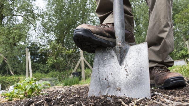Équipez creuser la terre avec une pelle de jardin photo stock