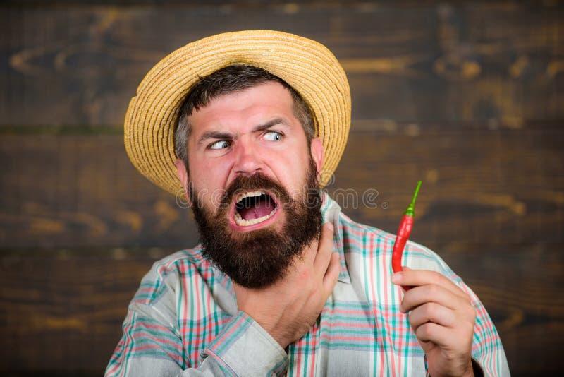 Équipez l'agriculteur de récolte de poivre de prise présent à poivre de piments chauds le fond en bois Poivre barbu de prise d'ag photographie stock