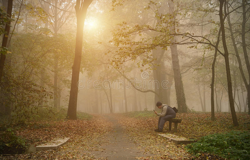 Équipez l'utilisation son téléphone dans la forêt brumeuse images libres de droits
