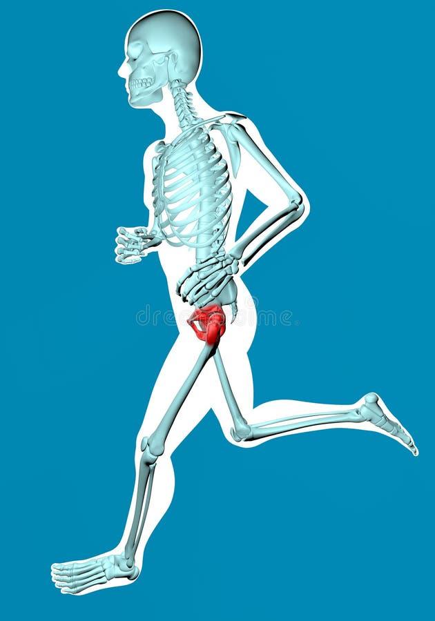 Équipez la marche vue sur le rayon X avec douleur dans le bassin illustration stock