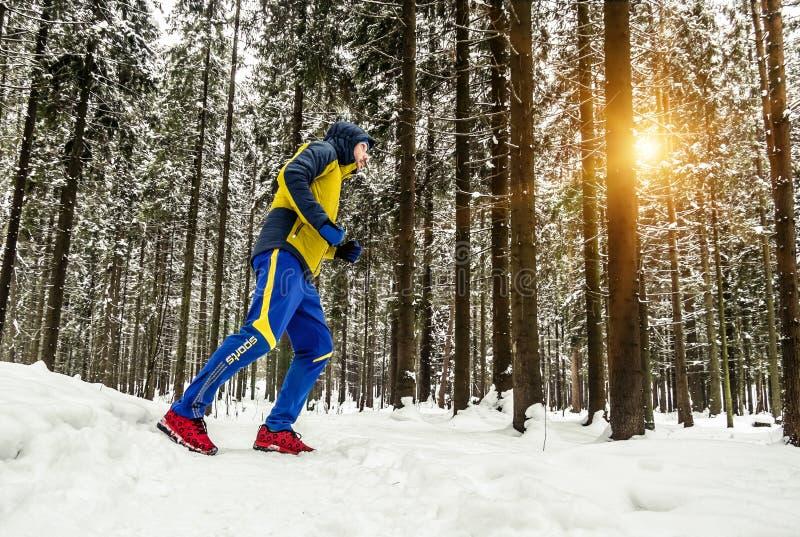 Équipez pulser sur la traînée dans la forêt d'hiver image libre de droits