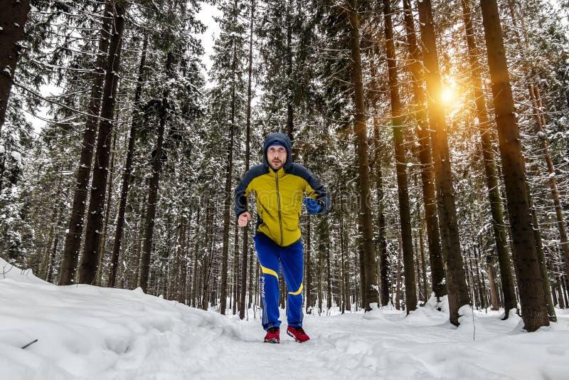 Équipez pulser sur la traînée dans la forêt d'hiver images stock