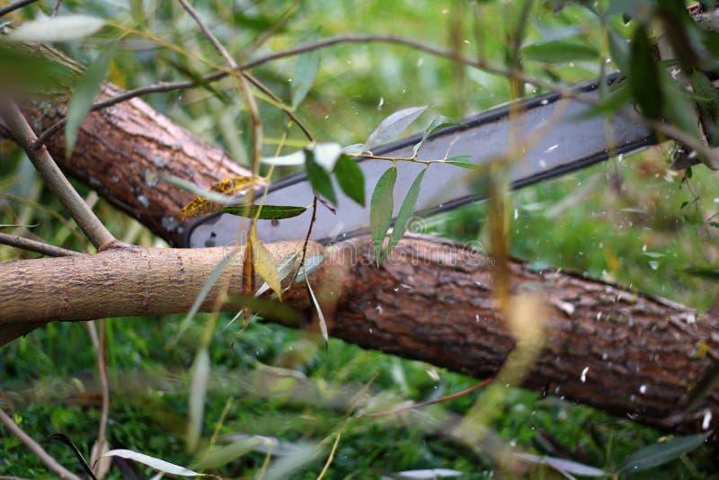 Équipez scier un arbre avec une tronçonneuse dans une scierie photographie stock libre de droits