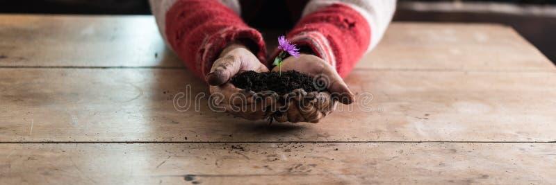 Équipez tenir une fleur pourpre de ressort dans un monticule de l'obscurité fertile ainsi photographie stock
