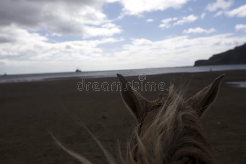 équitation élevée photo libre de droits