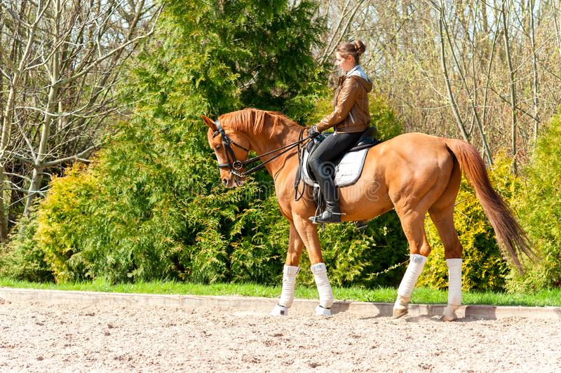 Équitation équestre d'entraîneur de femme à cheval photographie stock