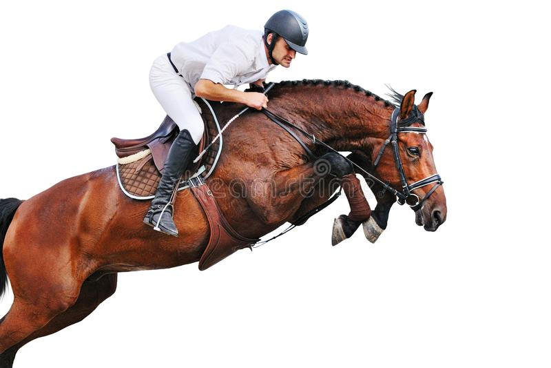 Équitation : cavalier dans l'exposition sautante photos libres de droits