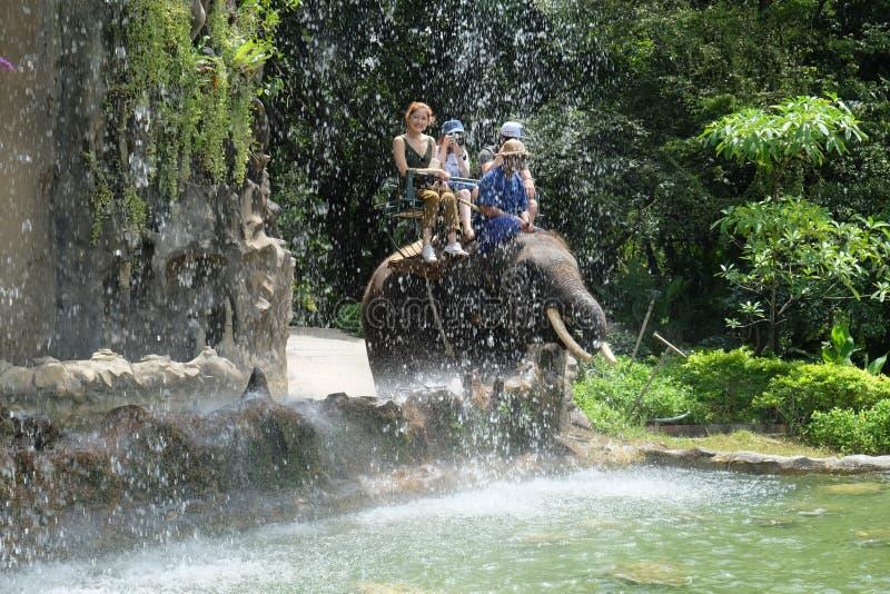 Équitation d'éléphant photographie stock libre de droits