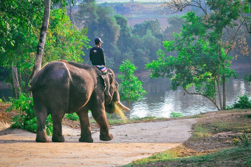 Équitation d'éléphant dans la forêt tropicale en Thaïlande image libre de droits