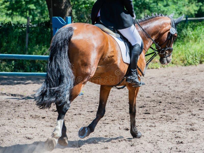 Équitation de dressage de sport équestre sur un cours de dressage photo libre de droits
