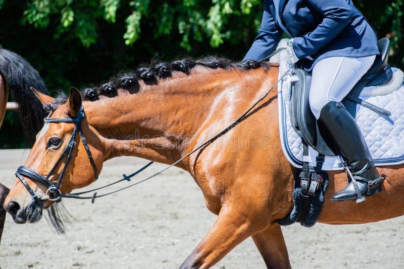 Équitation de dressage de sport équestre sur un cours de dressage images libres de droits
