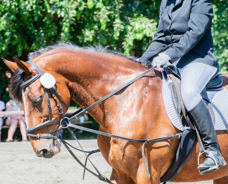 Équitation de dressage de sport équestre sur un cours de dressage photographie stock