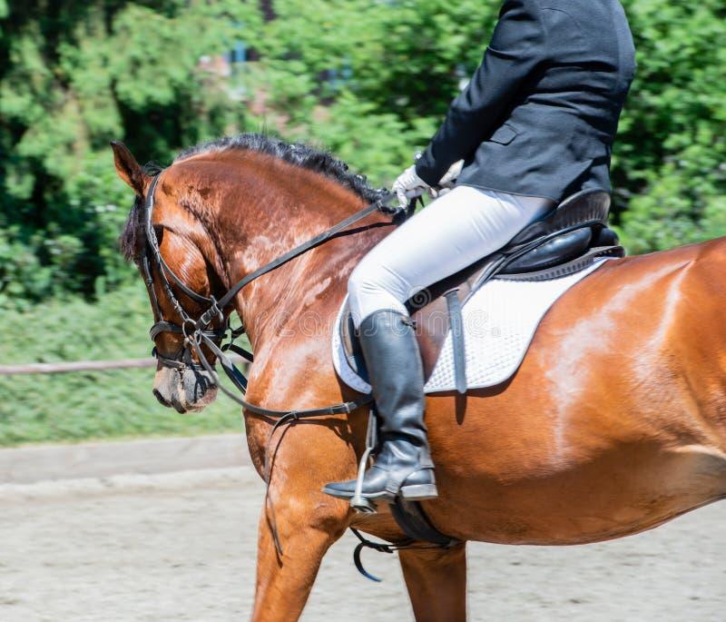 Équitation de dressage de sport équestre sur un cours de dressage images stock