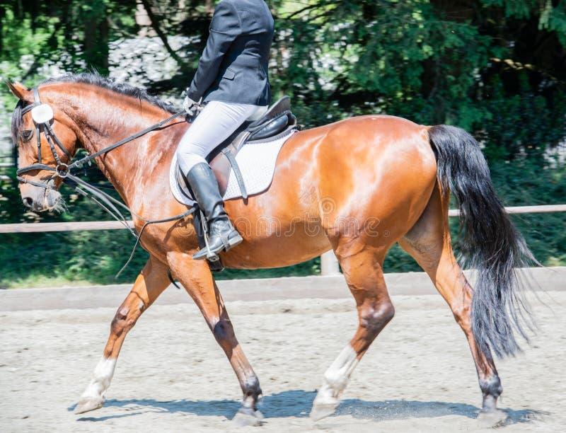 Équitation de dressage de sport équestre sur un cours de dressage photos stock