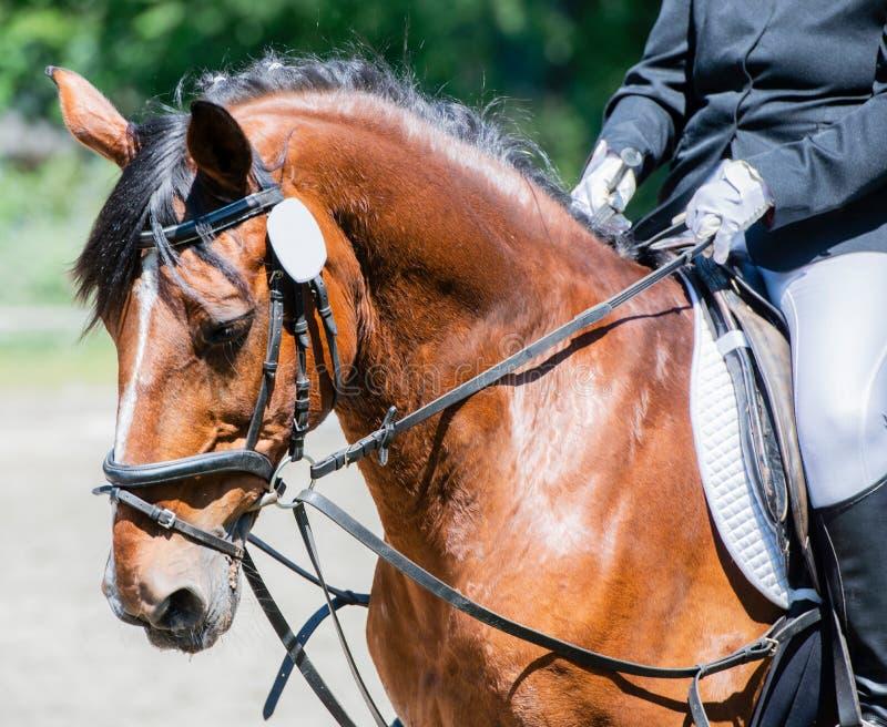 Équitation de dressage de sport équestre sur un cours de dressage photographie stock libre de droits