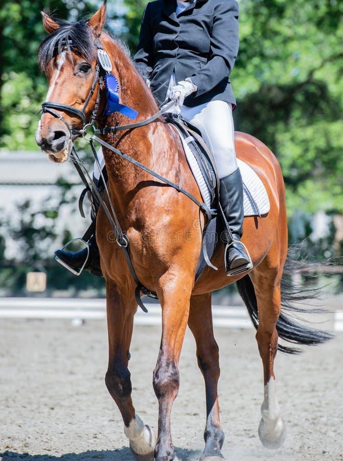 Équitation de dressage de sport équestre sur un cours de dressage photo stock