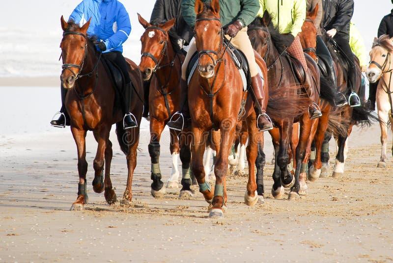 Équitation de horseback de groupe de Frontview sur la plage photographie stock libre de droits