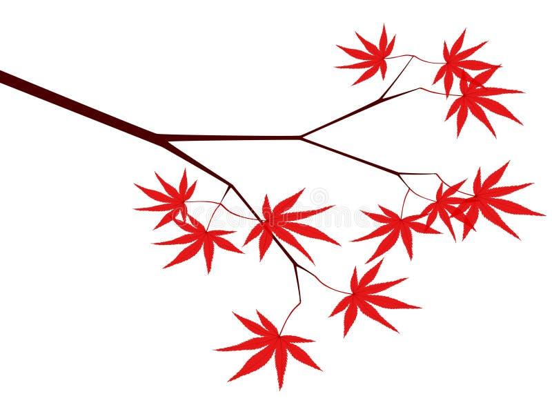 Érable japonais illustration de vecteur