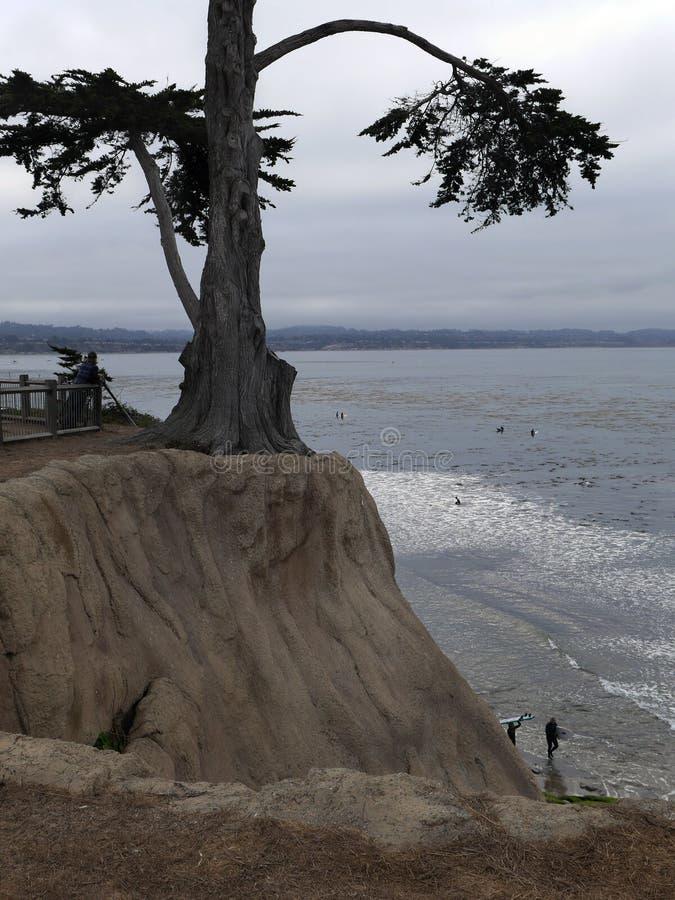 Érosion extrême, arbre de cyprès accrochant sur essayer de survivre photo stock