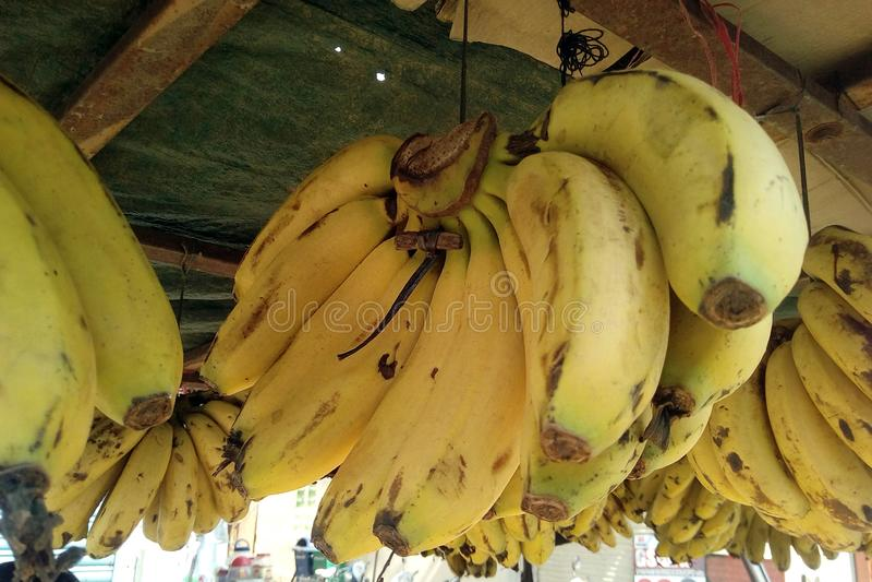Ésta es la imagen de las frutas amarillas del plátano que está colgando en manojo fotografía de archivo libre de regalías