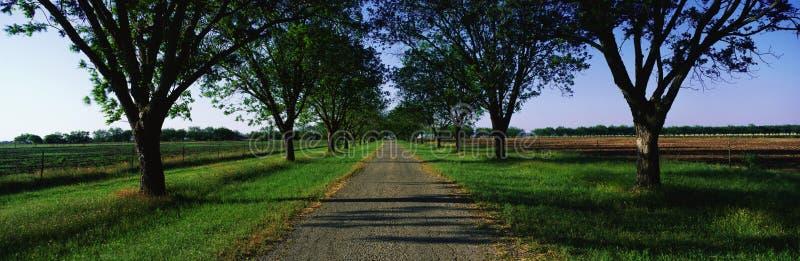Éste es Boone Hall Plantation Los árboles son robles vivos y musgo español (Ouercusvirginia) fueron plantados en 1741 El smal imágenes de archivo libres de regalías