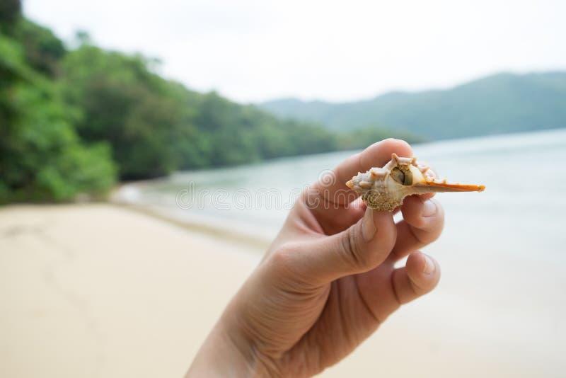 Éste es Thorn Conch Shell recogido de la playa fotos de archivo libres de regalías