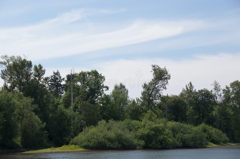 Été aux étangs de delta en Eugene Oregon photos libres de droits