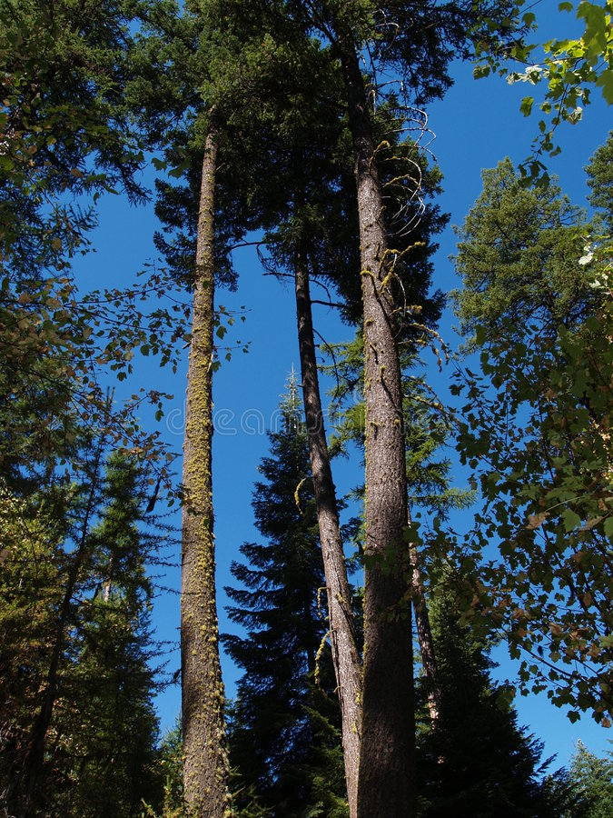 Été dans les arbres photographie stock libre de droits