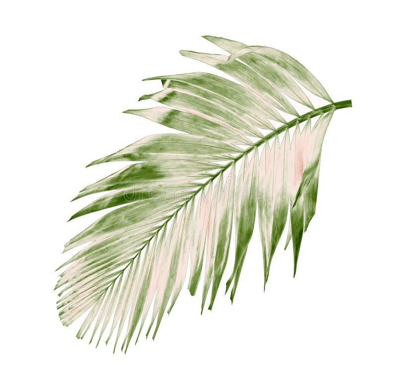 Été de concept avec la palmette verte de tropical fronde florale images libres de droits