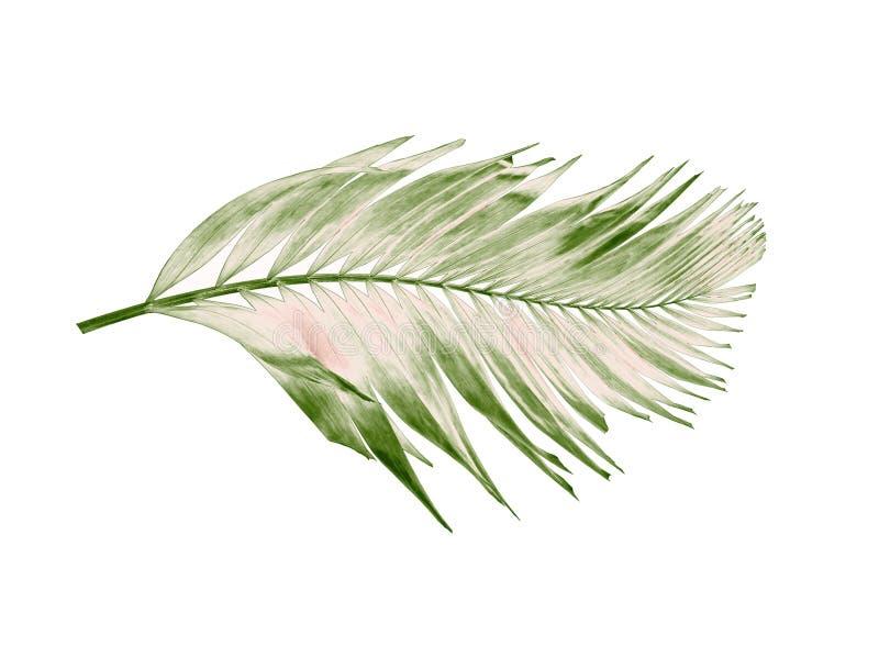 Été de concept avec la palmette verte de tropical fronde florale photos stock