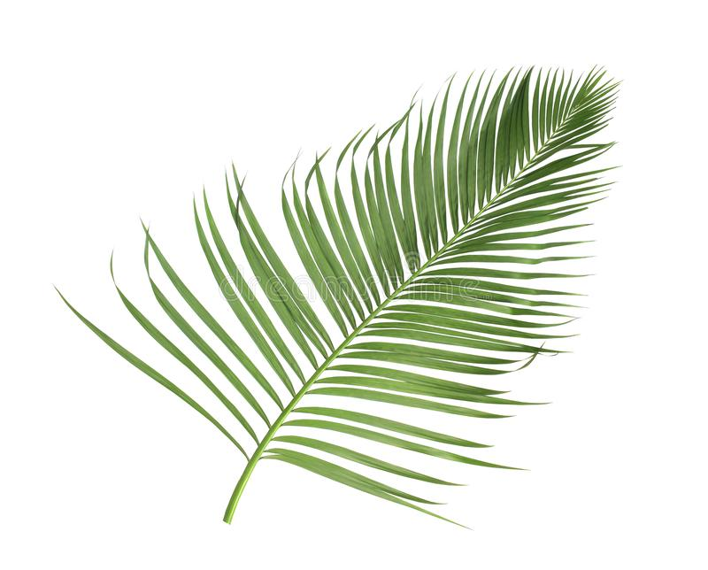 Été de concept avec la palmette verte de tropical fronde florale photographie stock