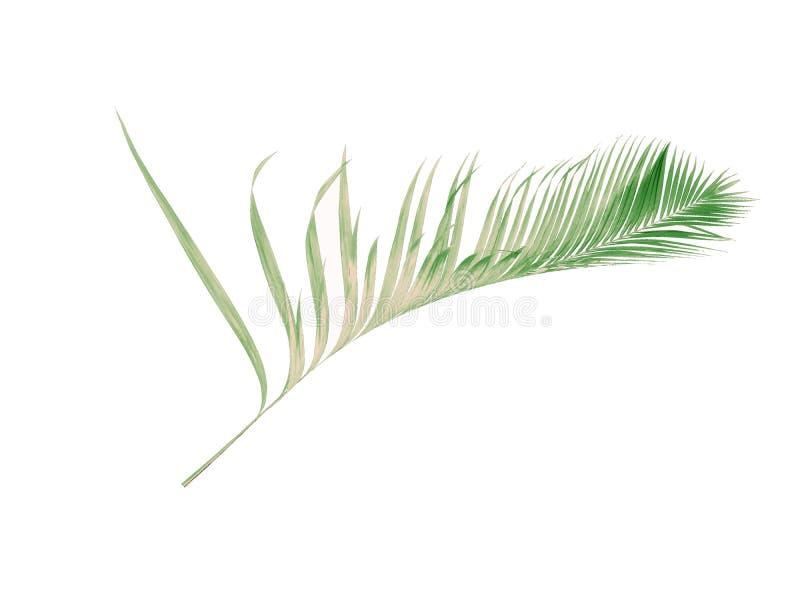 Été de concept avec la palmette verte de tropical fronde florale photographie stock libre de droits