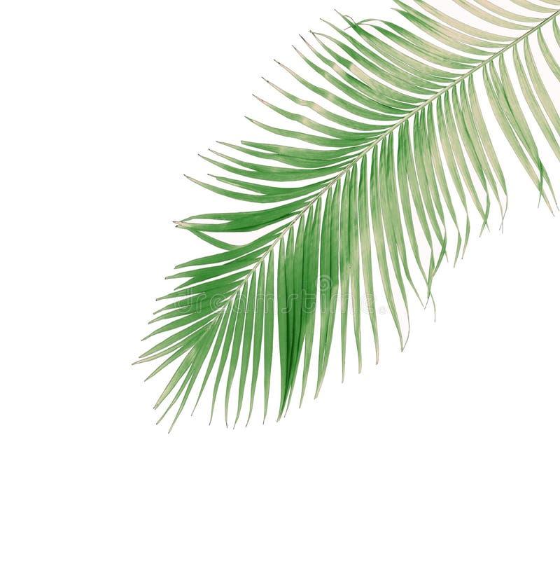 Été de concept avec la palmette verte de tropical fronde florale photos libres de droits