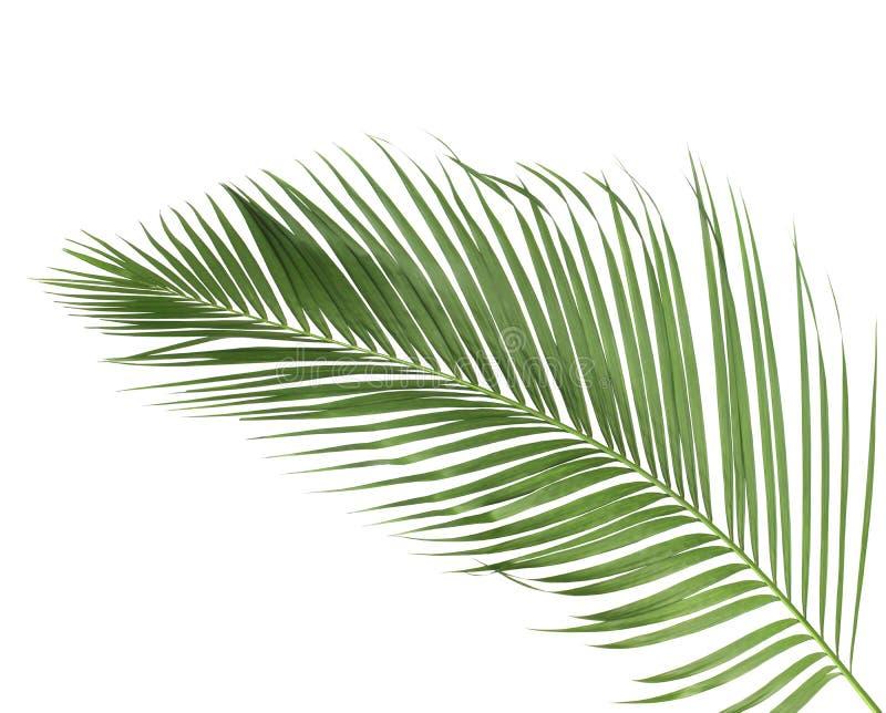 Été de concept avec la palmette verte de tropical fronde florale photo libre de droits