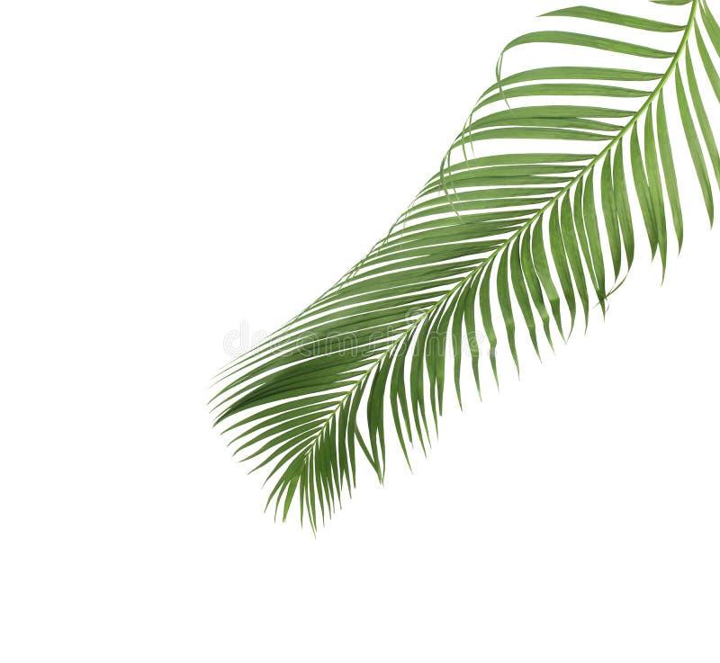 Été de concept avec la palmette verte de tropical fronde florale image libre de droits