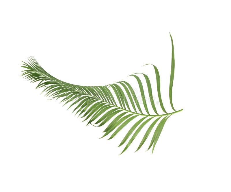 Été de concept avec la palmette verte de tropical fronde florale images stock