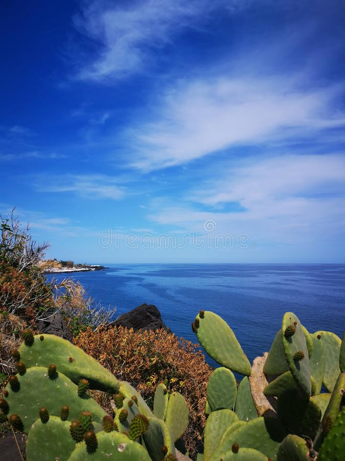 Été de figues de mer de Blu Sky photographie stock