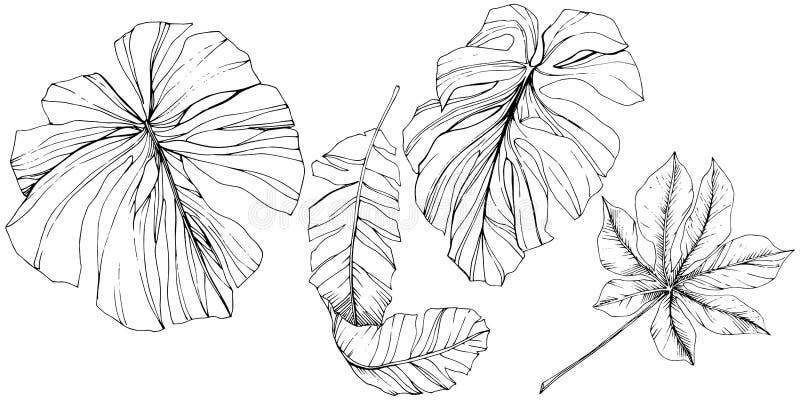 Été hawaïen tropical exotique Art gravé noir et blanc d'encre Élément d'isolement d'illustration de feuille illustration de vecteur
