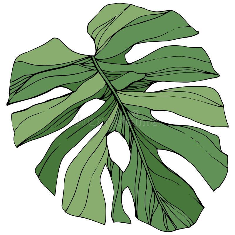 Été hawaïen tropical exotique Art gravé vert d'encre Élément d'isolement d'illustration de feuille illustration libre de droits